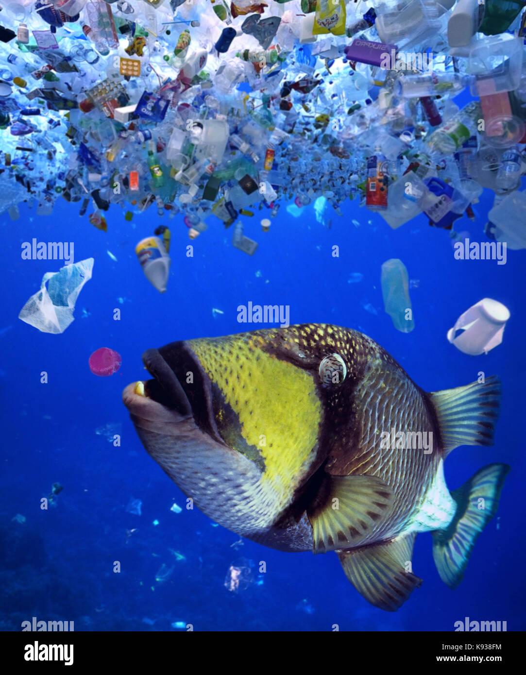 Comer una tapa de botella de plástico. Una gran cantidad de animales  marinos ingieren basura plástica porque creen que es comestible 3663e48068c2