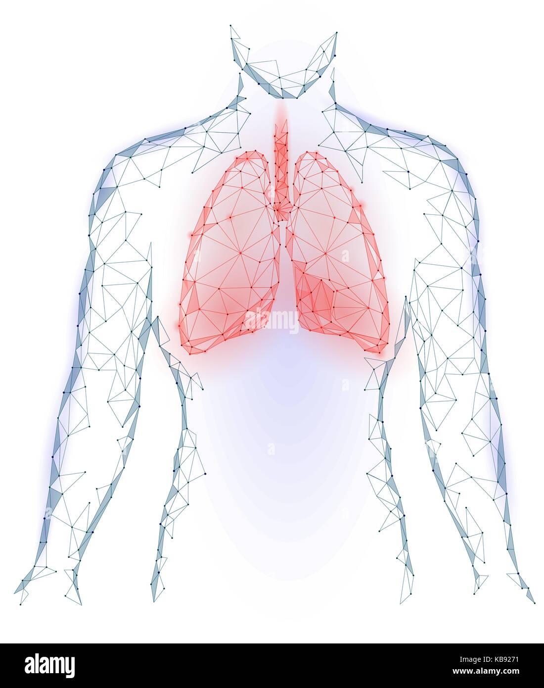 Los pulmones infección pulmonar órgano interno. Sistema respiratorio ...