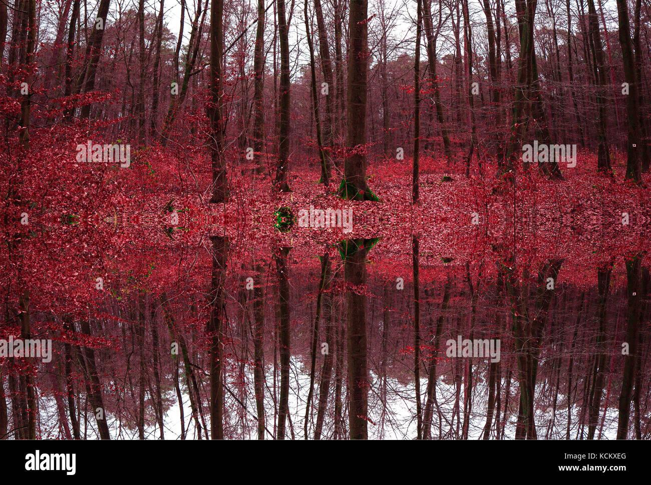 Hojas de color rojo en el bosque en invierno Foto & Imagen De Stock ...
