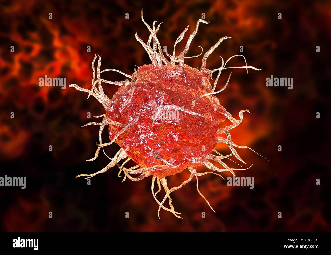 Las células dendríticas, equipo ilustración. Una célula dendrítica ...