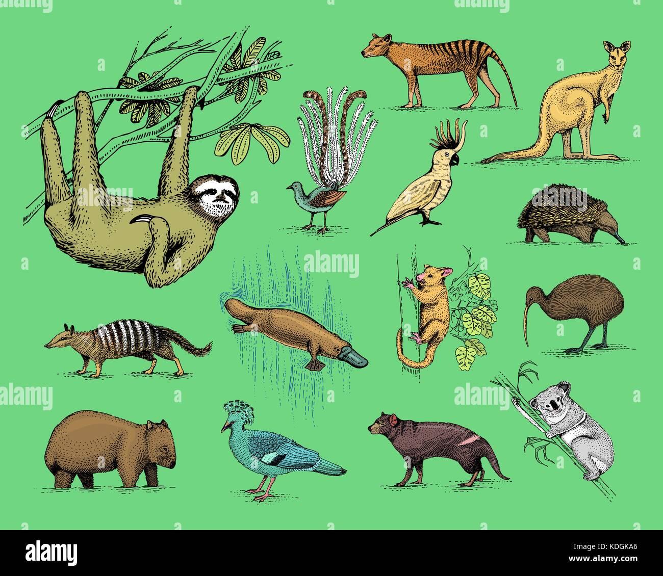 Gran Conjunto De Australia Y Nueva Zelandia Simbolos Grabados De