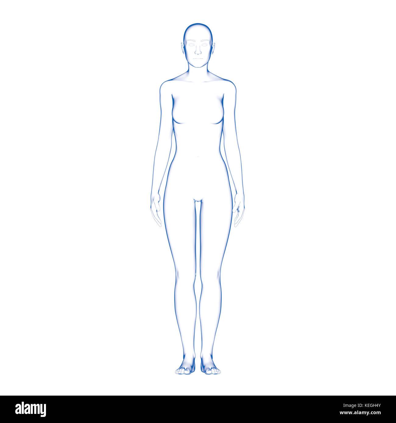 La forma del cuerpo humano femenino Foto & Imagen De Stock ...