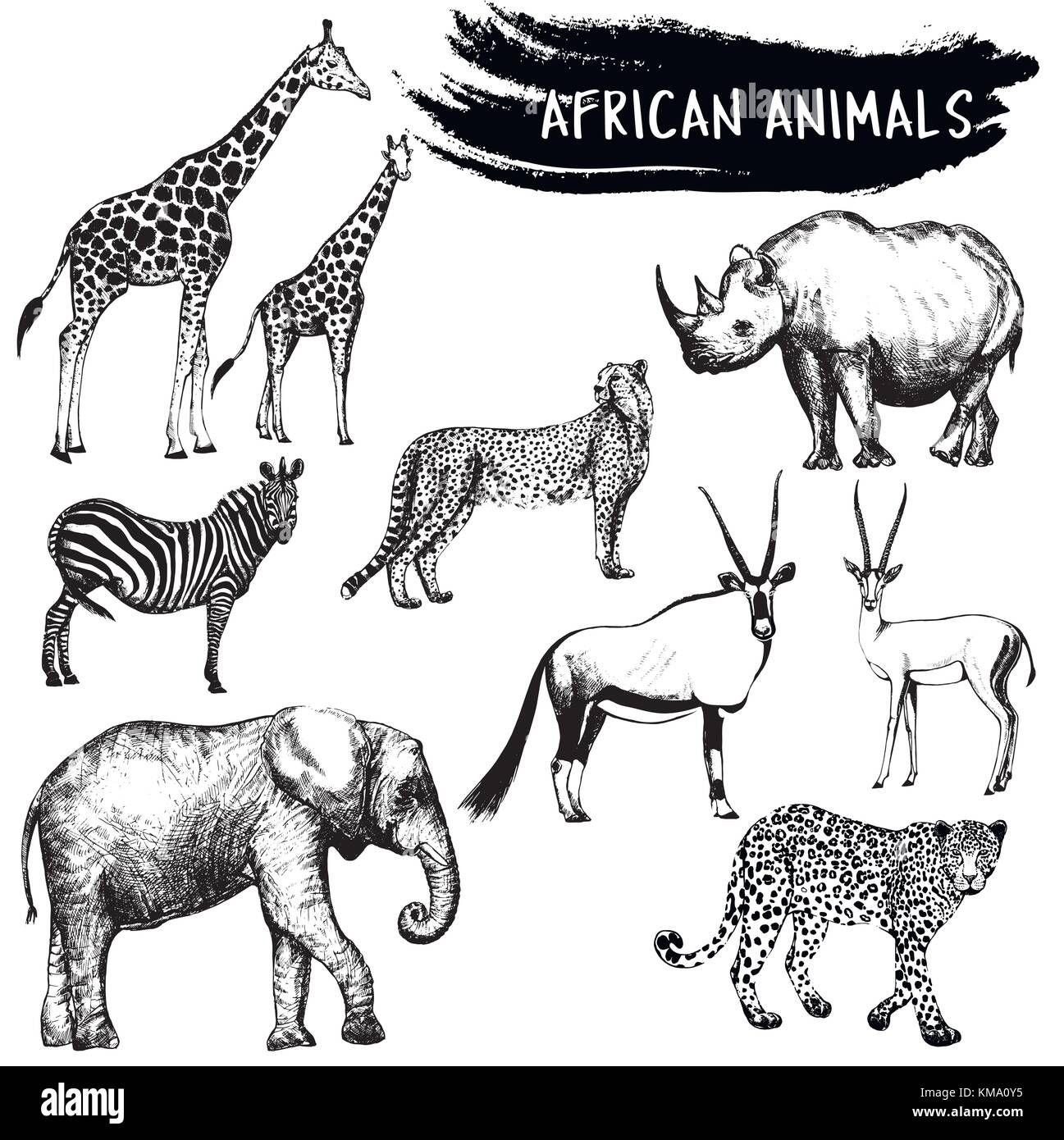 Croquis dibujados a mano de animales africanos - jirafas, cebras ...