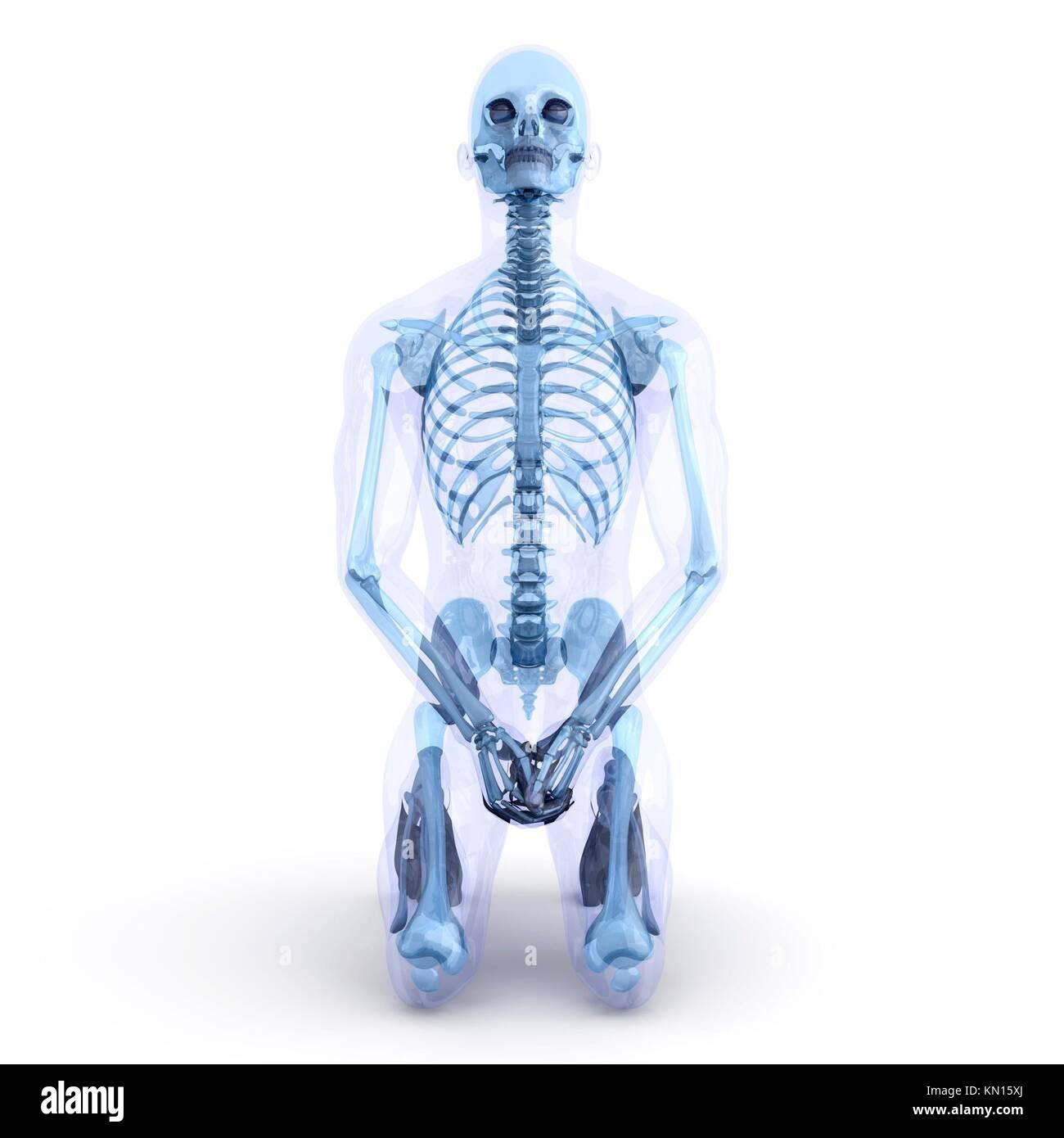 Un hombre, humano, Cuerpo translucido Anatomía 3D Visualización ...