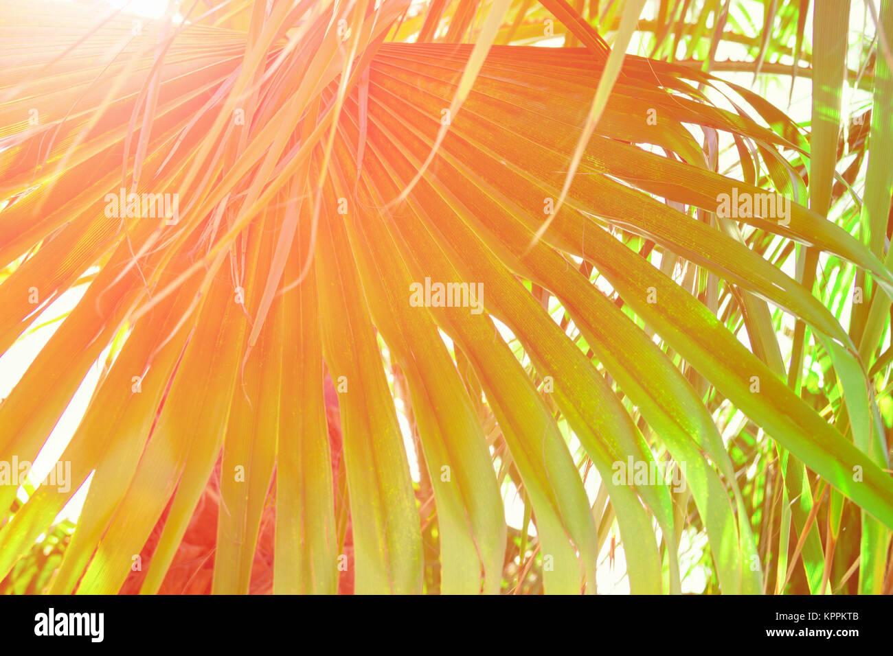 Redondo grande de hoja de palma puntiagudo Golden Sun Hipster tonos ...