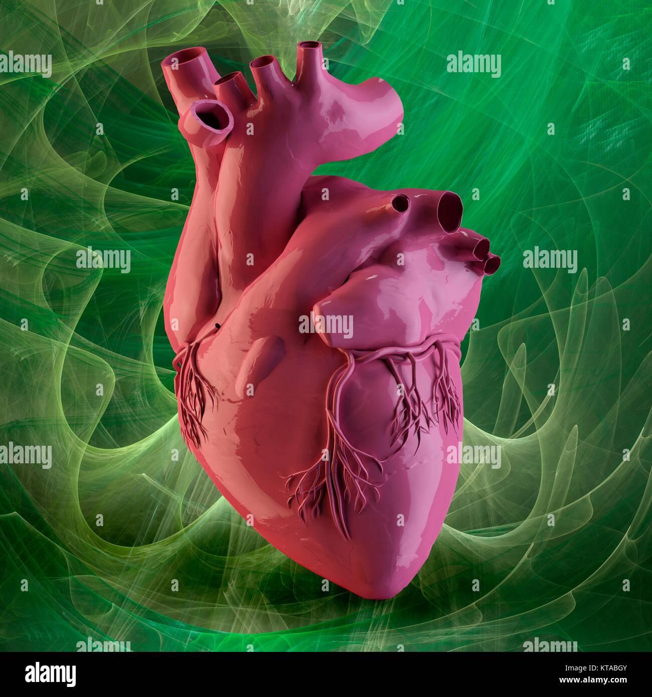 Corazón y de las arterias coronarias.3D por ordenador ilustración de ...
