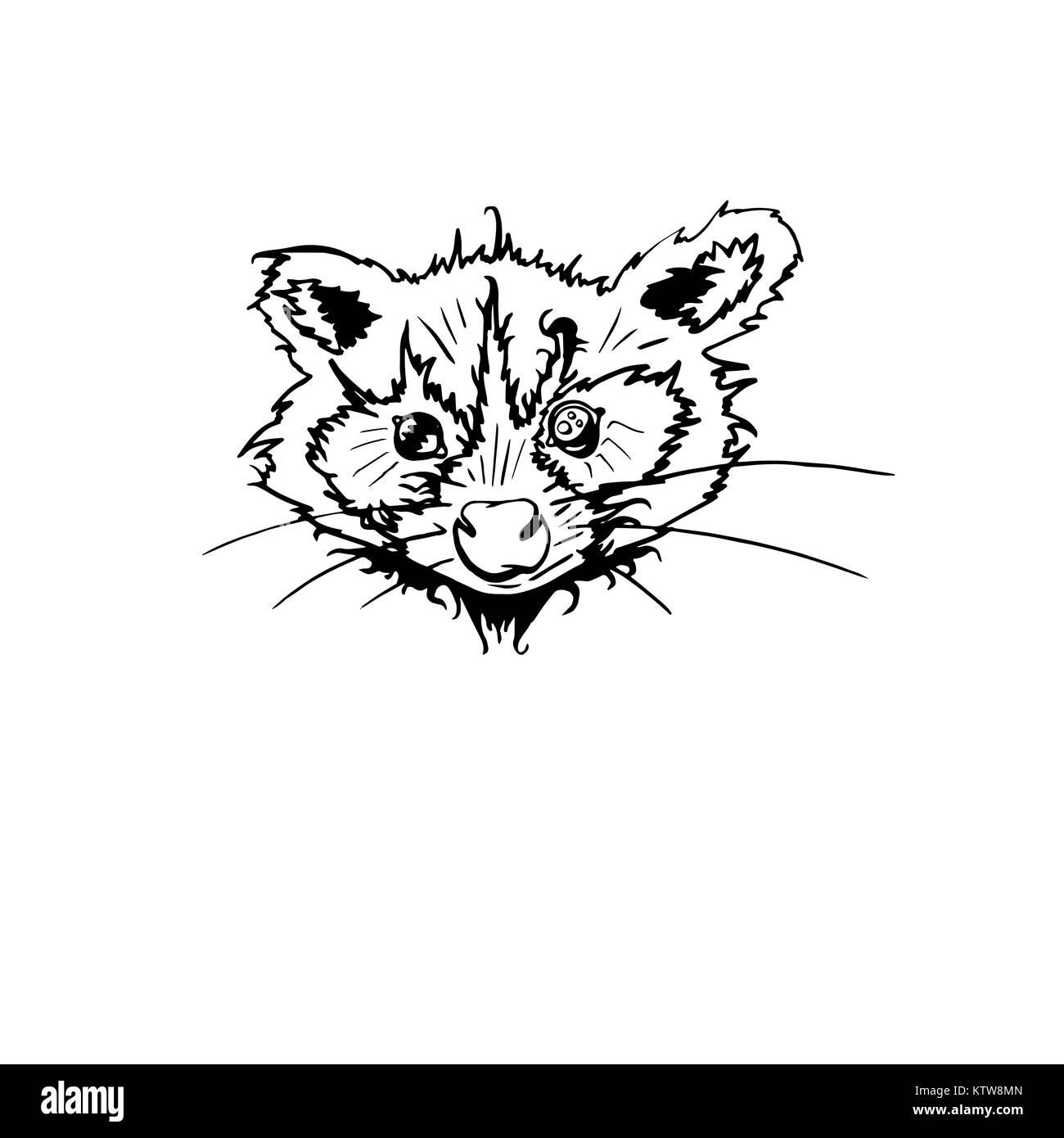 Raccoon aislados. Caricatura del animal. Curioso personaje. Vector ...