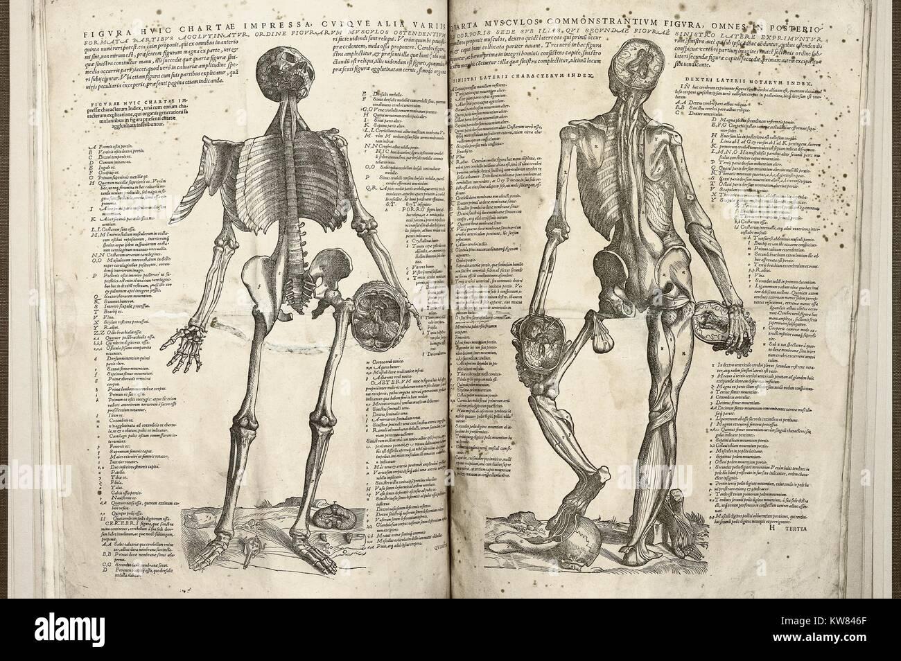 Dos imágenes del cuerpo humano; la página izquierda presenta la ...