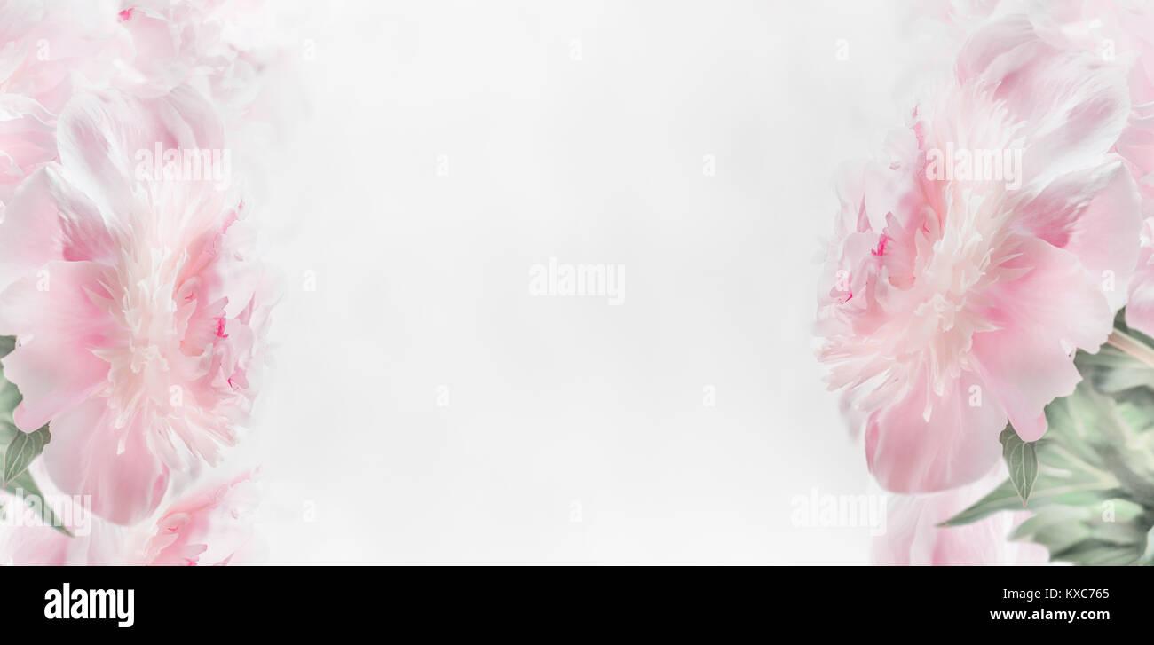 Peonies marco floral de color rosa pastel sobre un fondo claro ...
