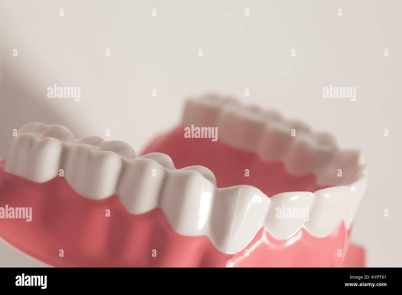 Dientes humanos Dental modelo sobre un fondo blanco Foto & Imagen De ...