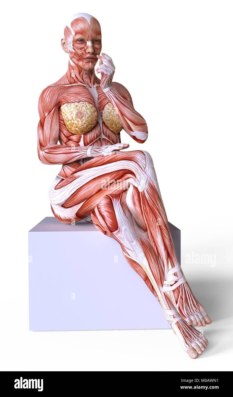 El cuerpo femenino sin piel, anatomía y músculos aislado en blanco ...