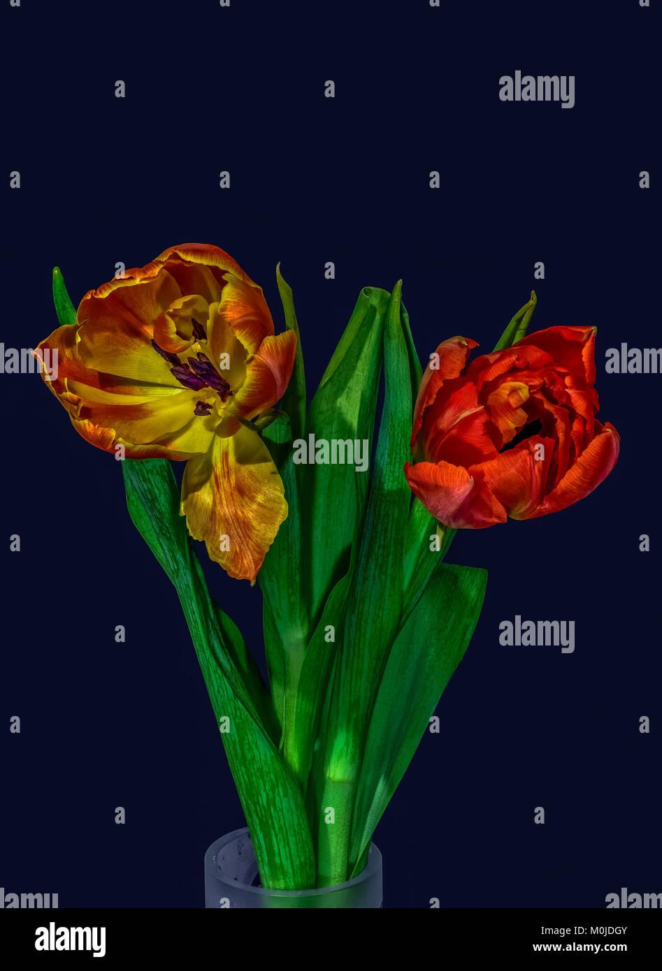 Hermosa Flor Azul Del Arte Del Uña Bandera - Ideas Para Pintar Uñas ...