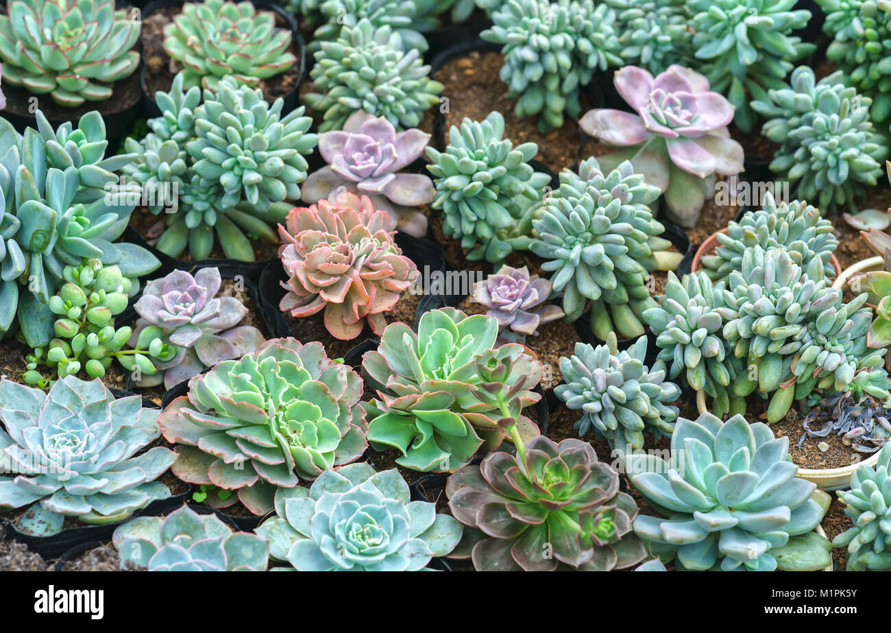 Jardineras de plantas suculentas en el jard n se trata de - Jardineras para jardin ...