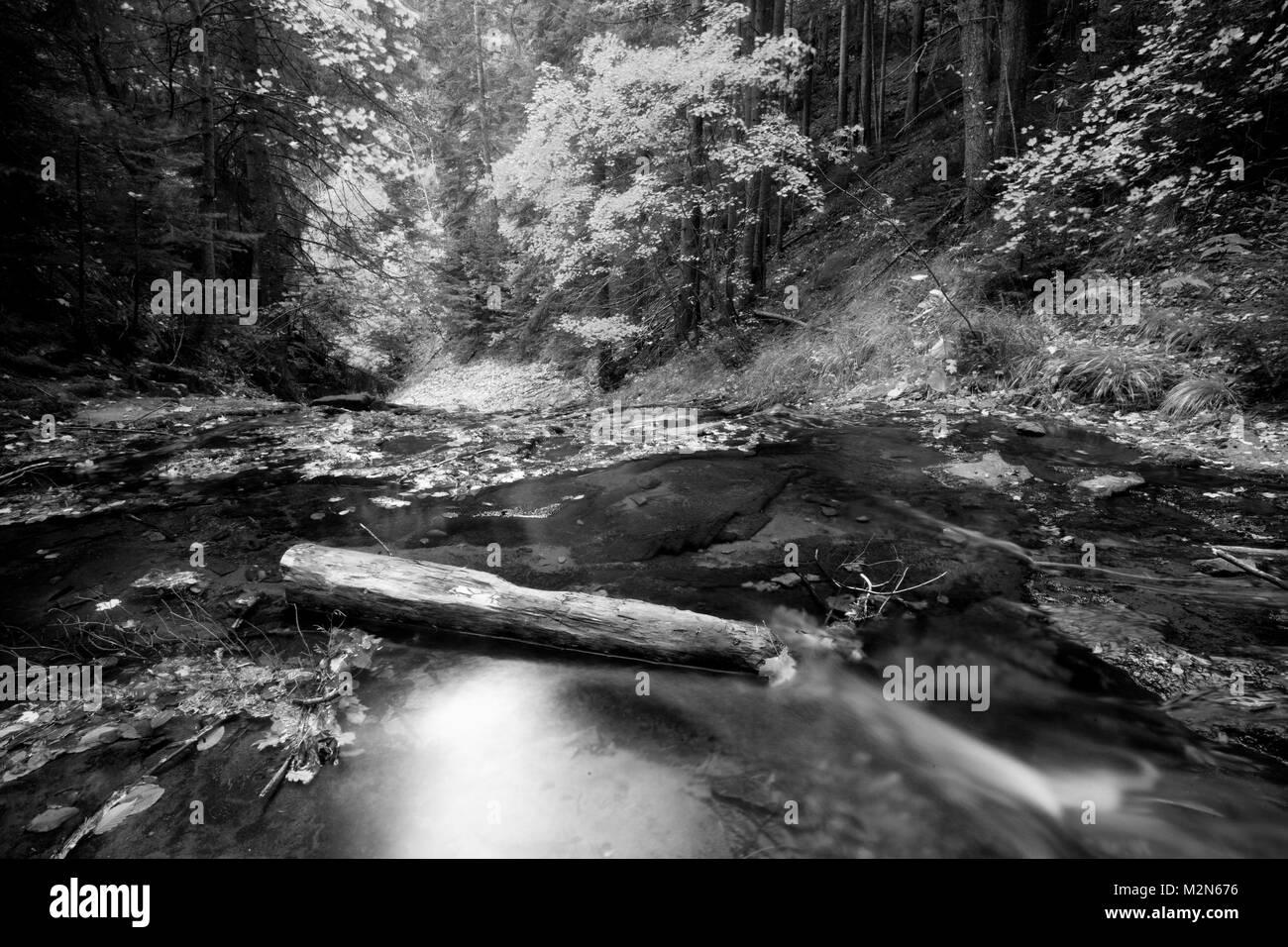 Resumen en blanco y negro naturaleza Paisaje con río frío de montaña ...