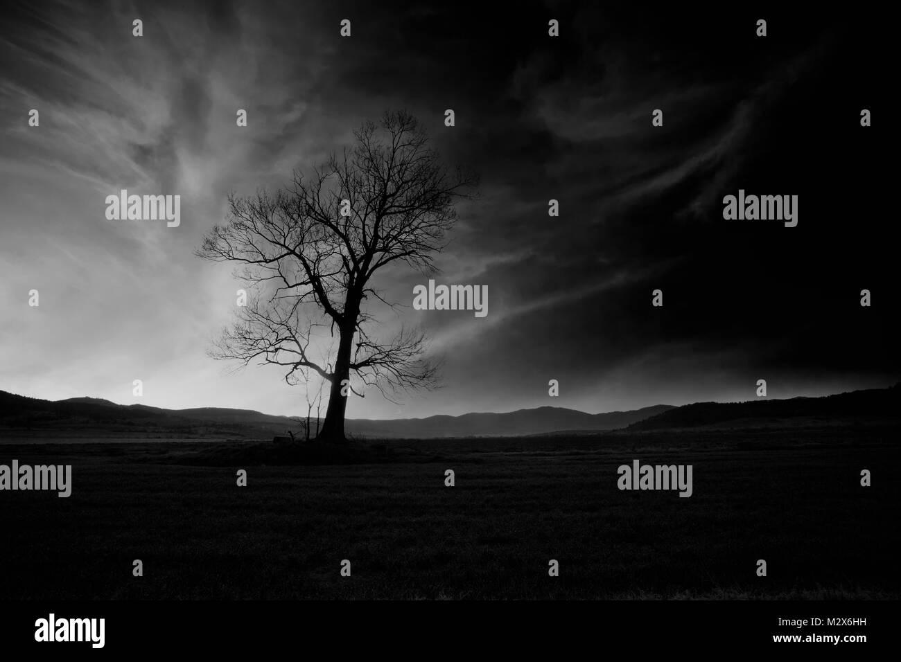 Resumen en blanco y negro contrastado alto \'low key\' horror paisaje ...