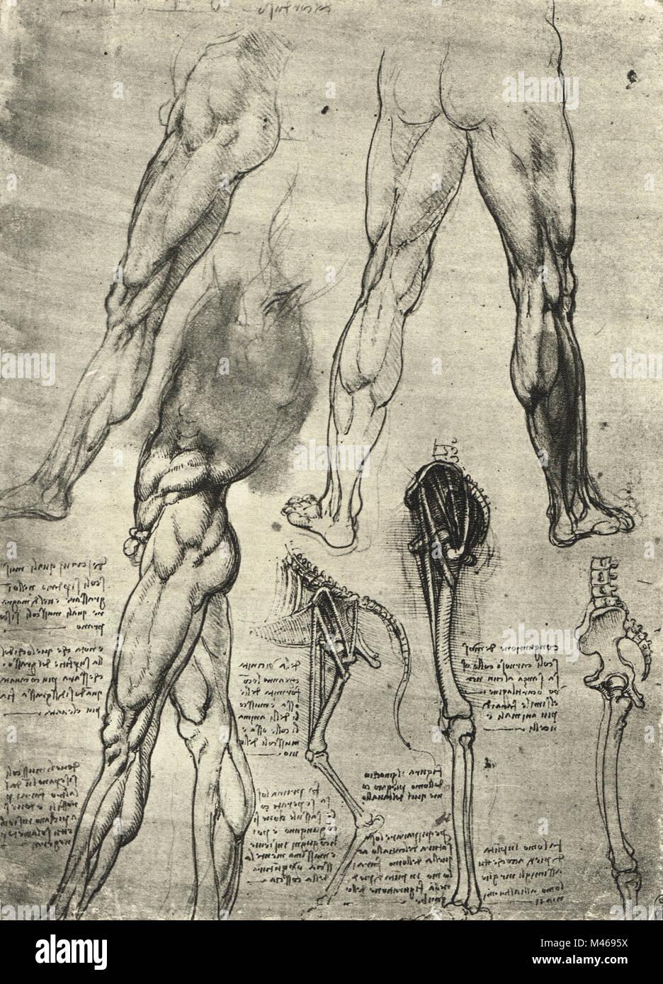 Dibujo anatómico. Los estudios de las piernas de los seres humanos ...