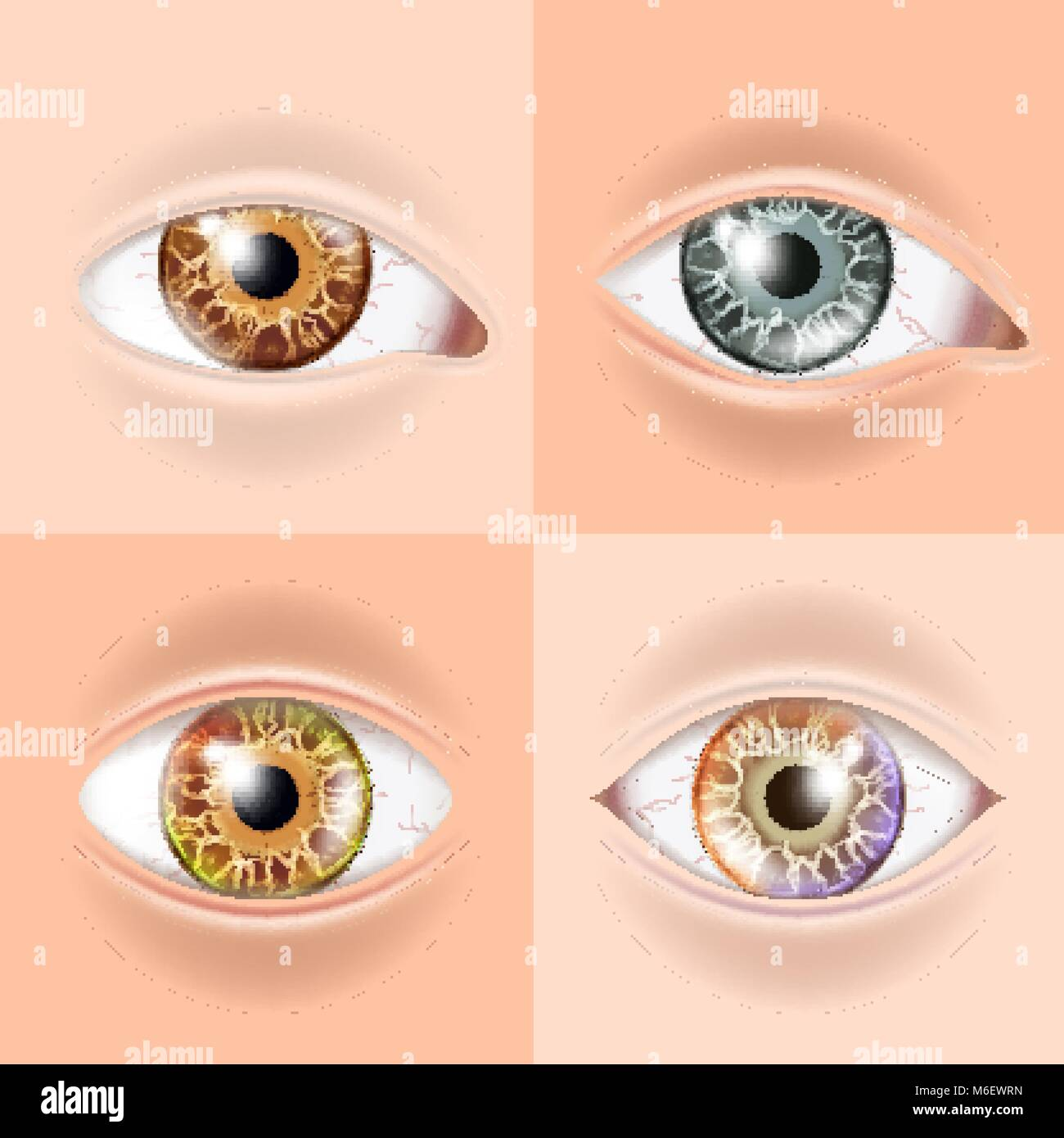 Ojo Humano Establezca Vector. Concepto de visión. Médicos de ...