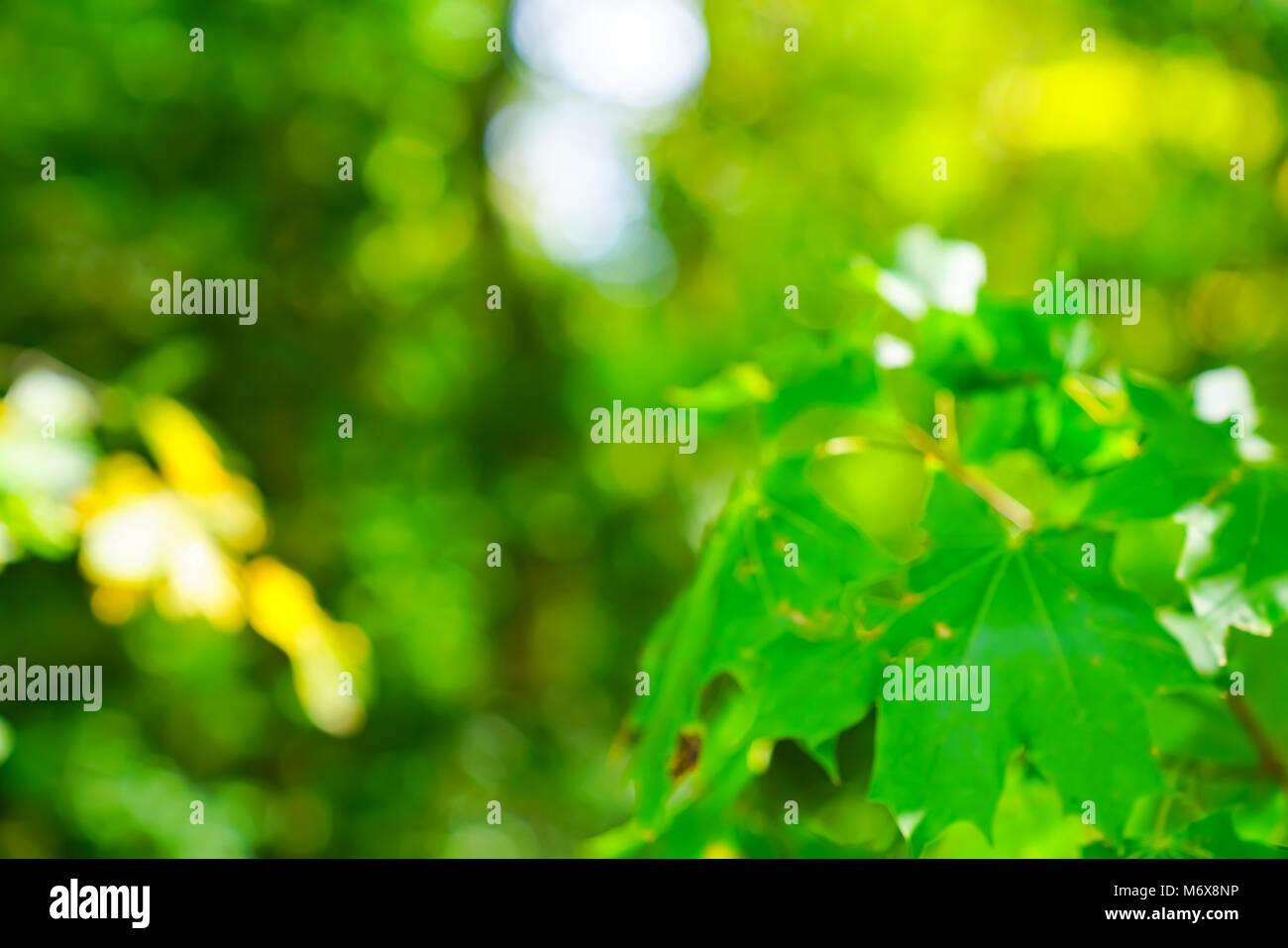 Resumen borrosa de fotograma completo de color verde dorado fondos ...