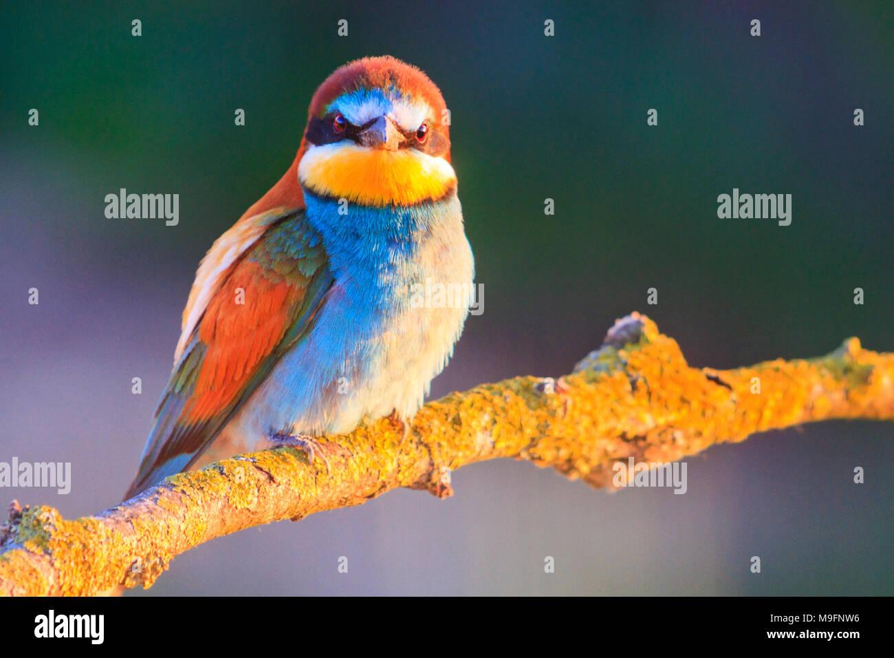 Perfecto Pájaro Enojado De Navidad Para Colorear Elaboración ...