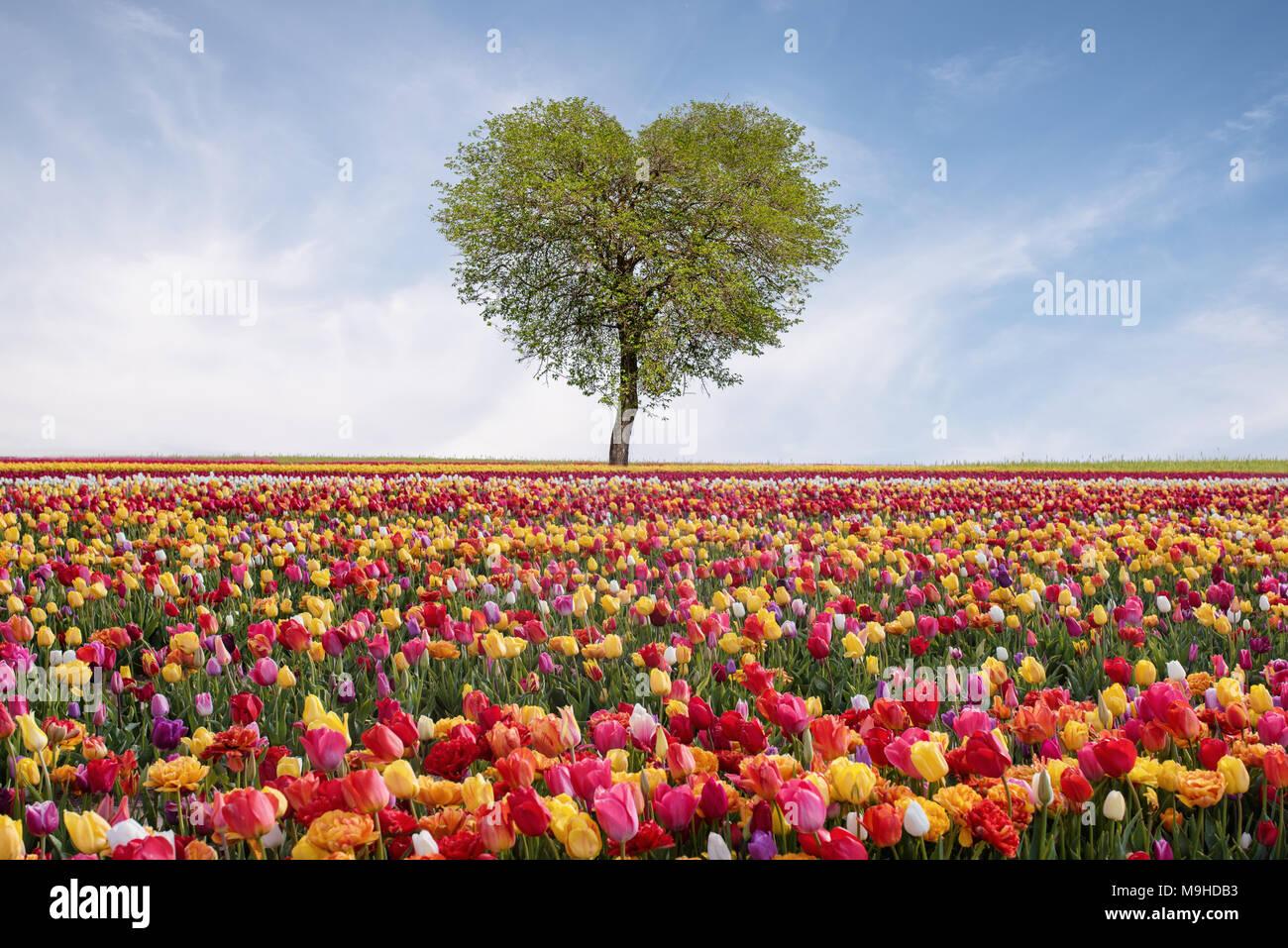 árbol De Amor En Primavera árbol En Forma De Corazón Contra El