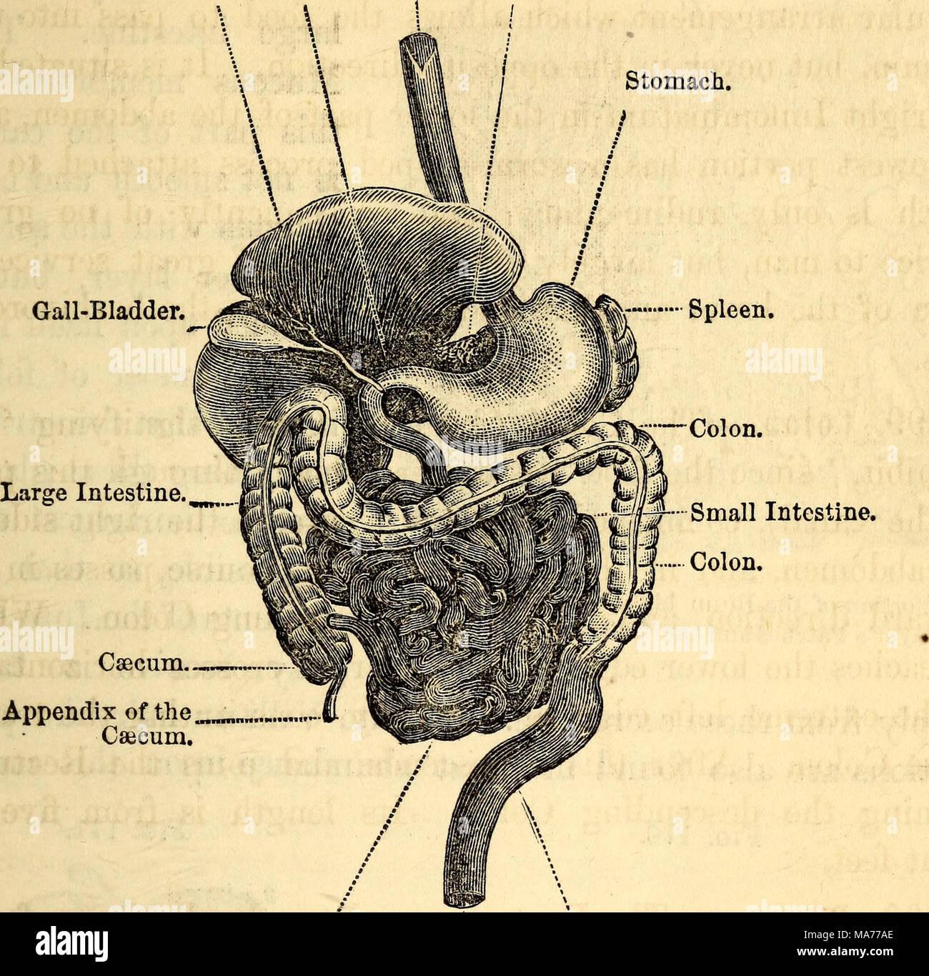 Lujoso Anatomía Ortopédica Rederos Foto - Imágenes de Anatomía ...