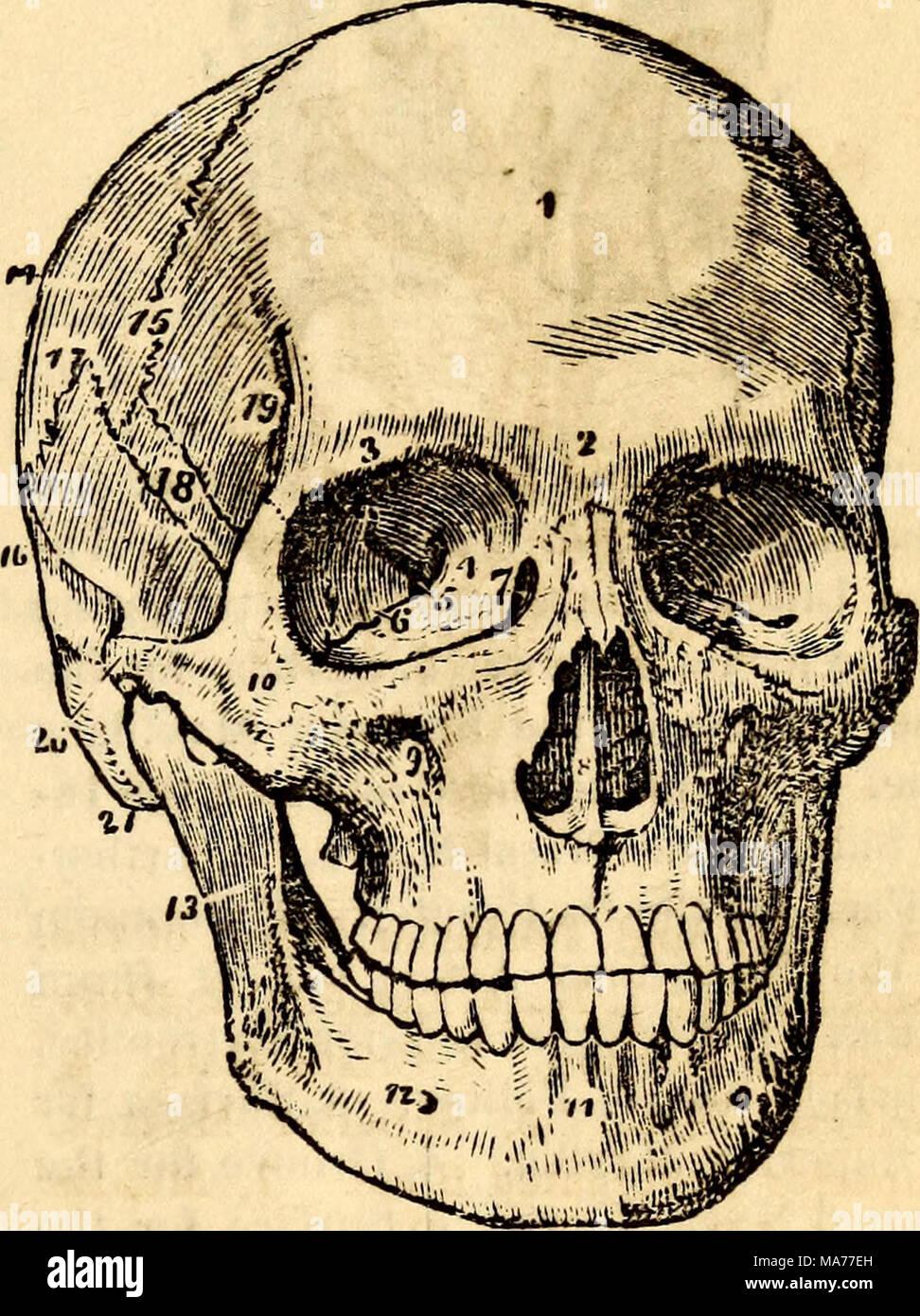 Increíble Anatomía Y Fisiología Del Cráneo Bosquejo - Imágenes de ...