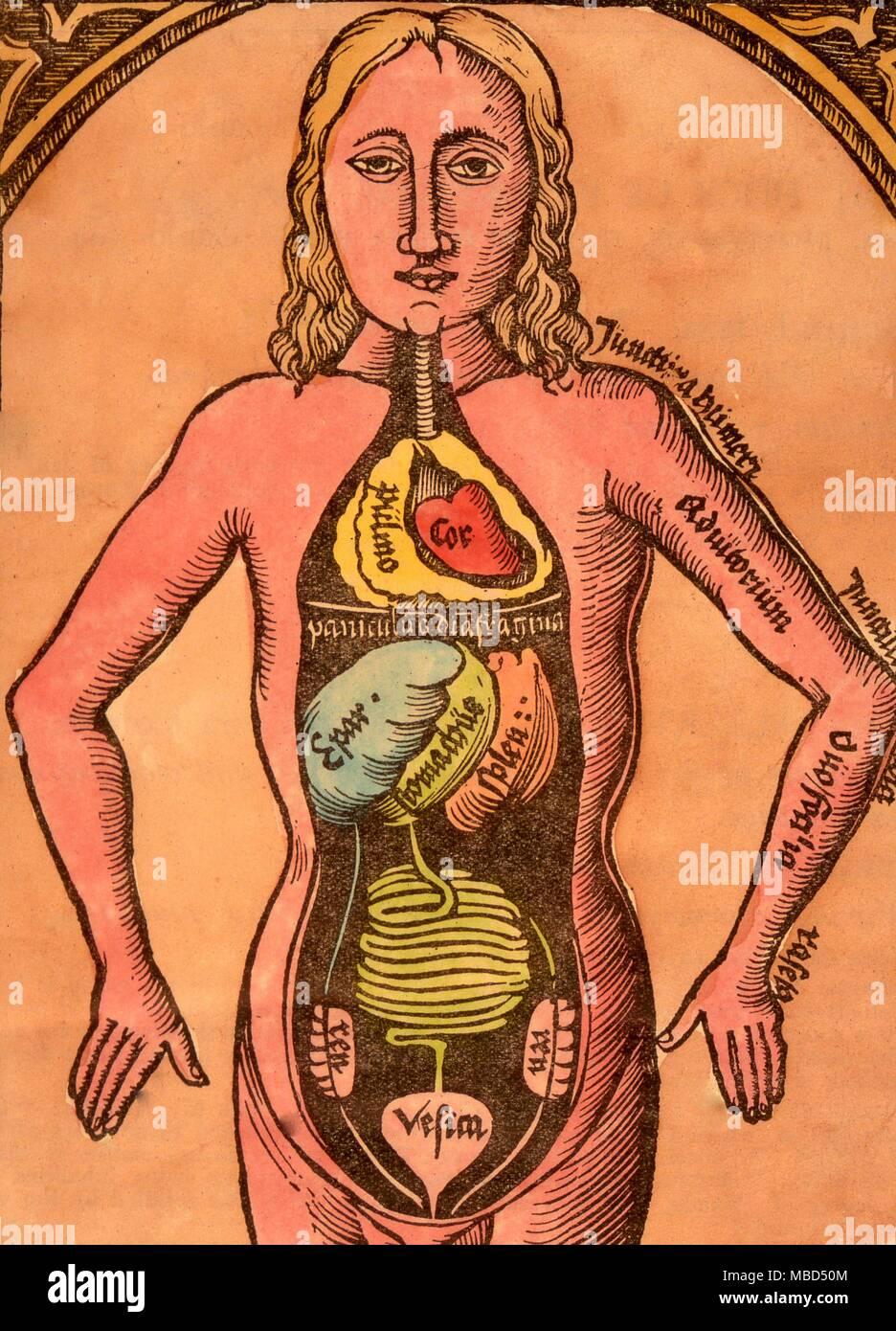 Herbal, muestran el interior de una mujer. Xilografía crudo ...