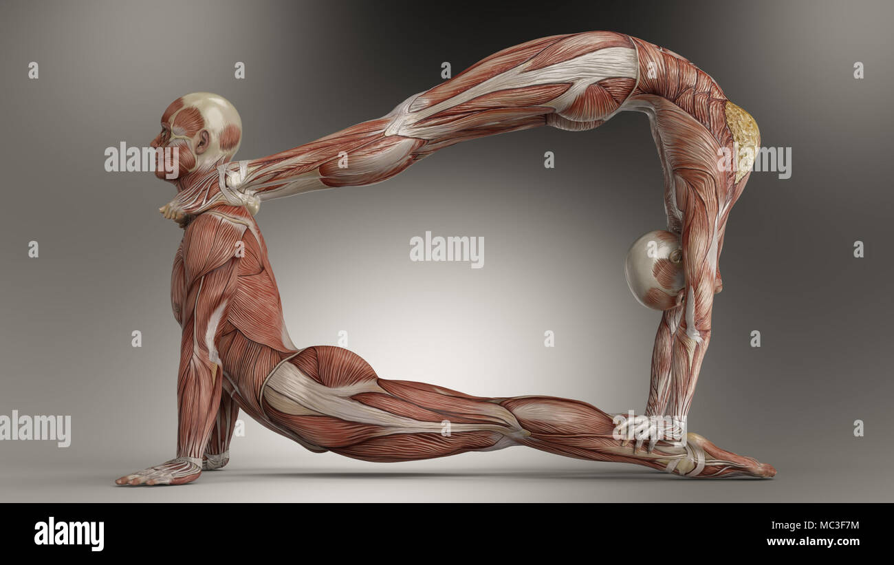 Las parejas yoga plantean con hombres y mujeres mostrando su ...