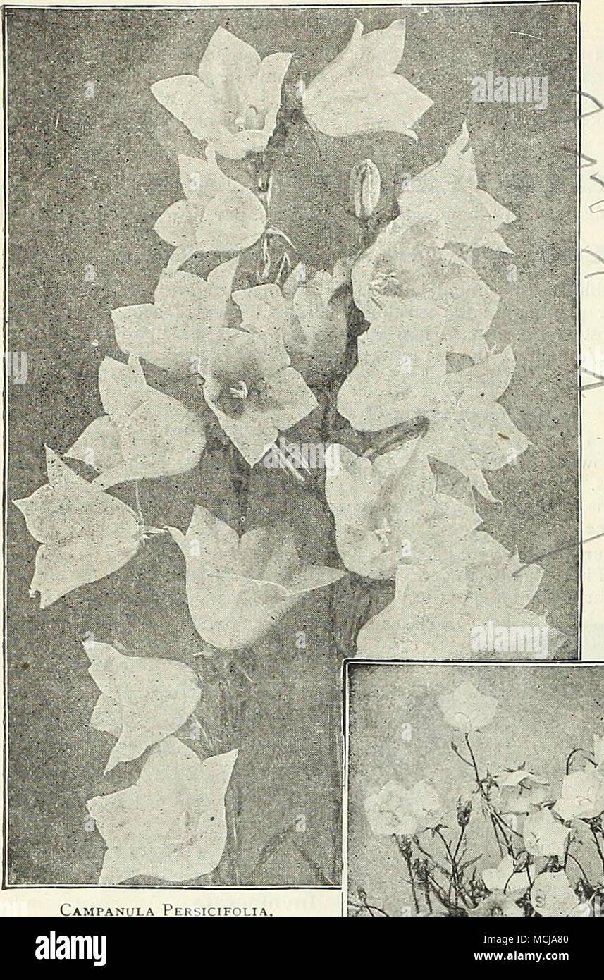 Asombroso Flor Blanca Pegatinas De Uñas Ornamento - Ideas de Pintar ...