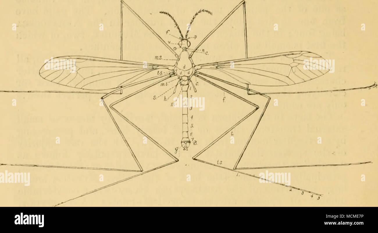 Único Diagrama Abdomen Imágenes - Anatomía de Las Imágenesdel Cuerpo ...