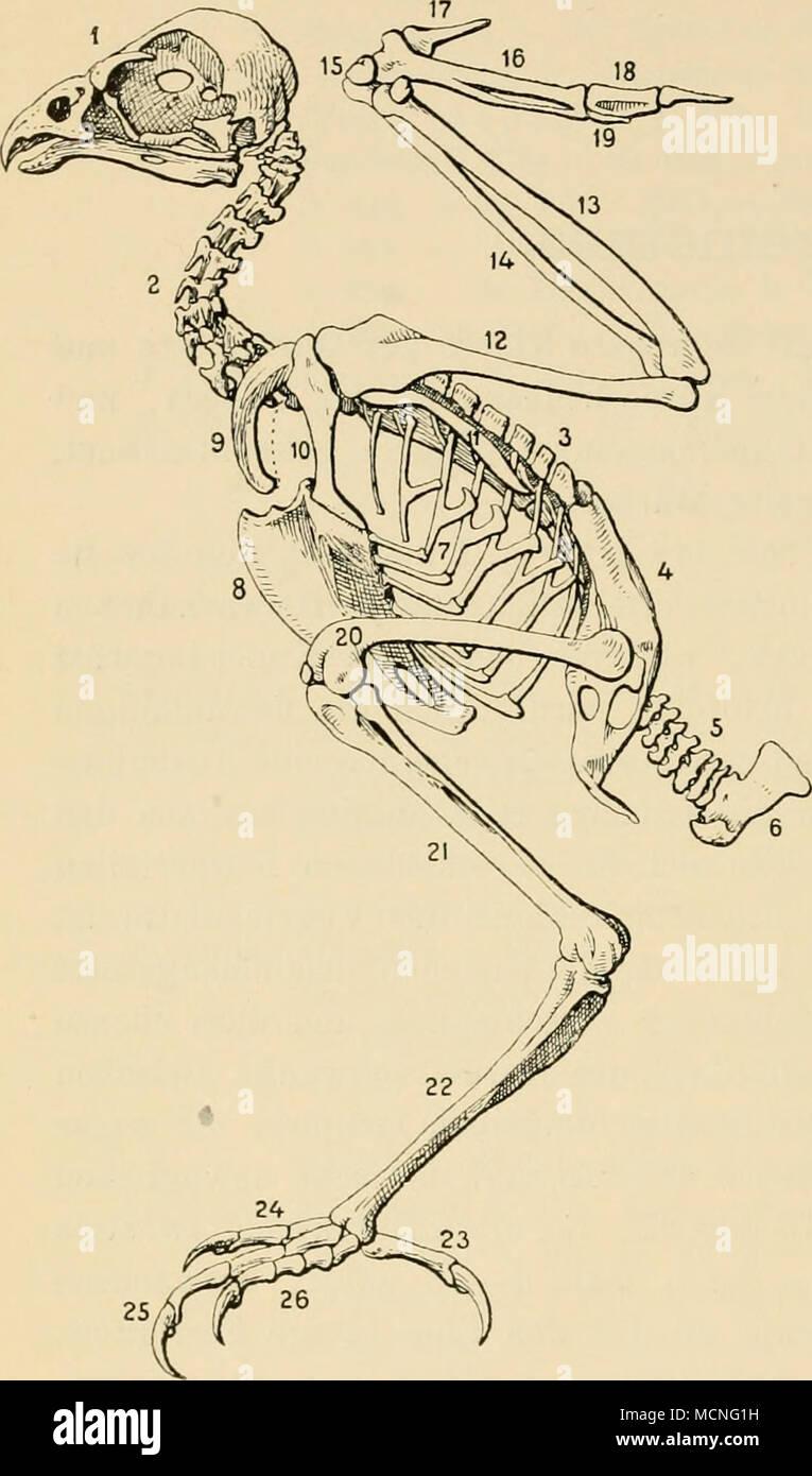 Fein Halswirbel Bilder - Menschliche Anatomie Bilder - madeinkibera.com