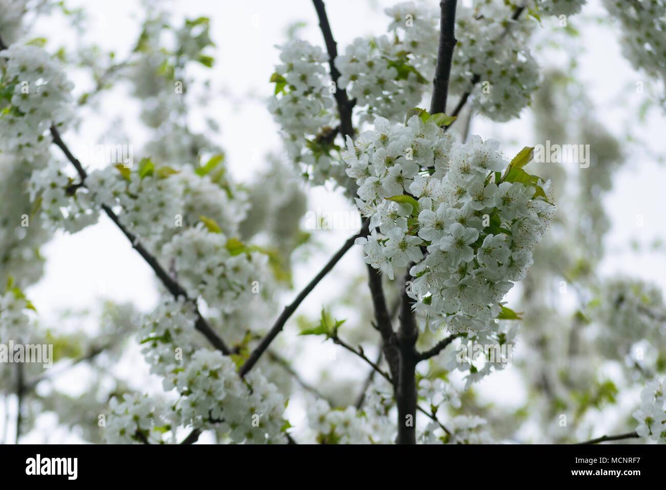 Lujo Uñas Rosa Blanca Foto Polaco Embellecimiento - Ideas Para ...