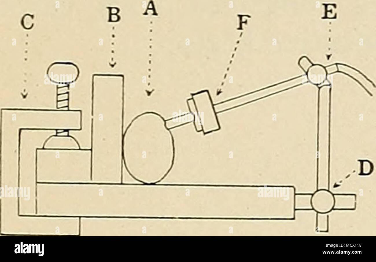 Lujo Diagrama De Muñeca Friso - Anatomía de Las Imágenesdel Cuerpo ...
