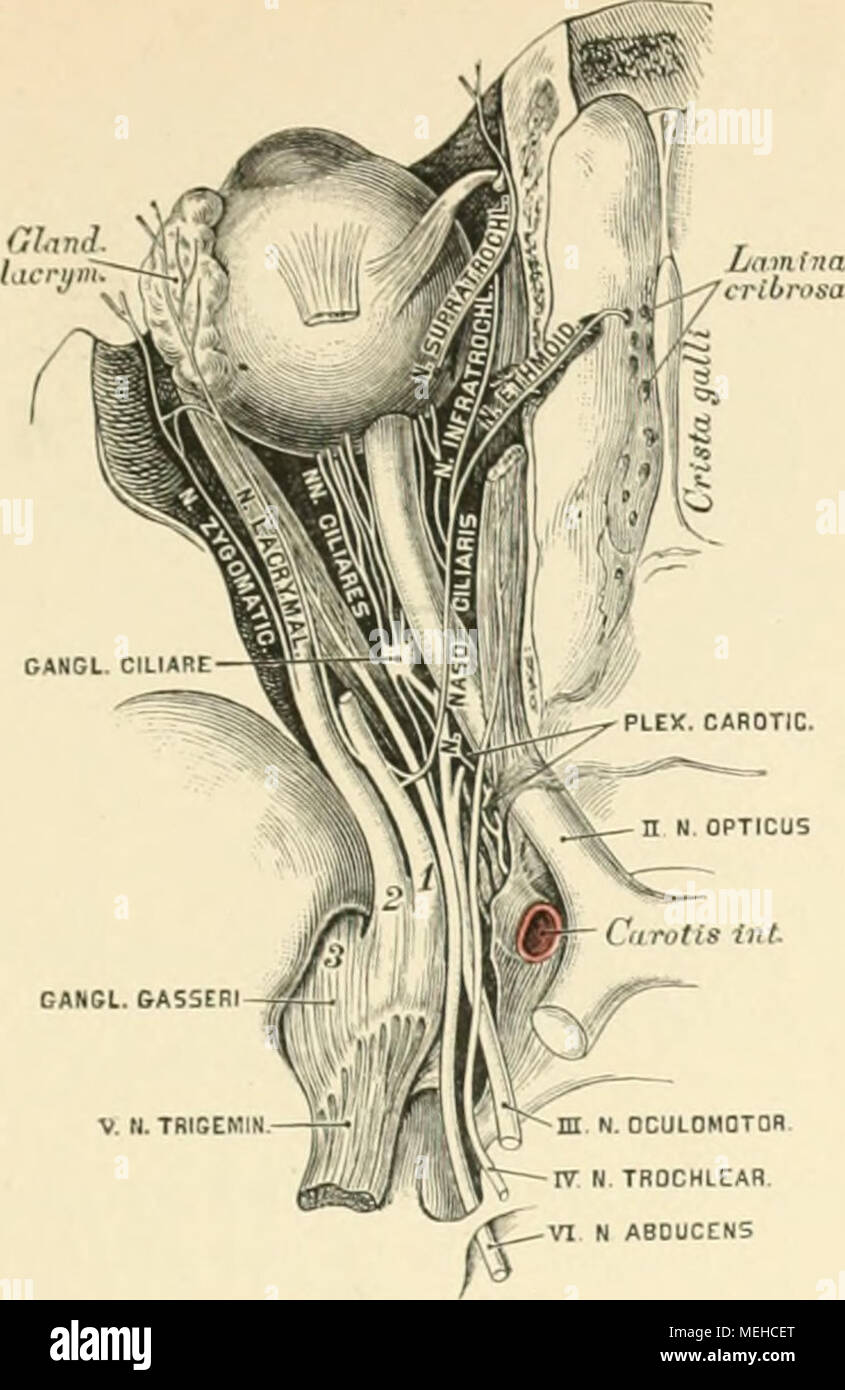 Erfreut Anatomie Und Physiologie Färbung Arbeitsmappe Kapitel 8 ...
