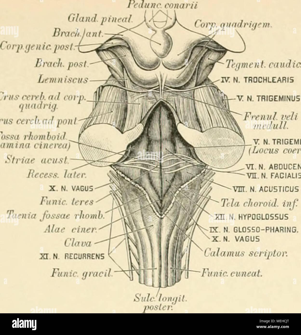 Ungewöhnlich Daphnia Magna Anatomie Fotos - Anatomie Ideen - finotti ...
