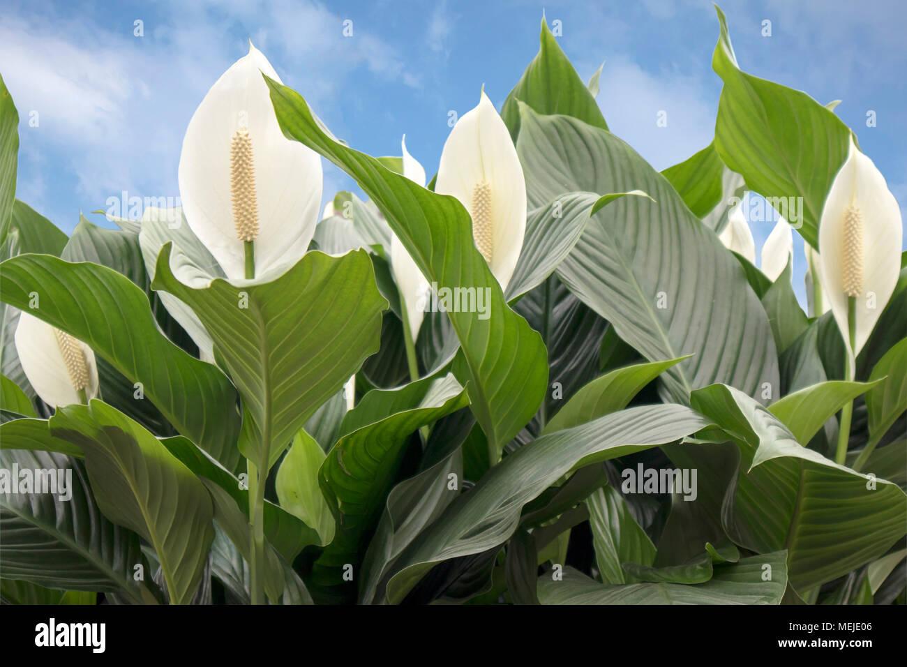 Asombroso Flor Tutorial De Uñas Colección de Imágenes - Ideas Para ...