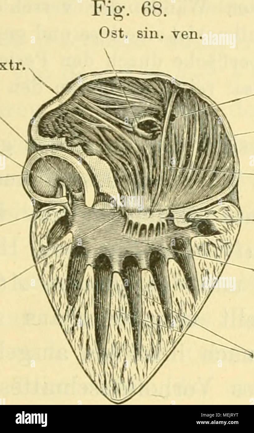 Beste Antriebsmaschine Anatomie Fotos - Menschliche Anatomie Bilder ...