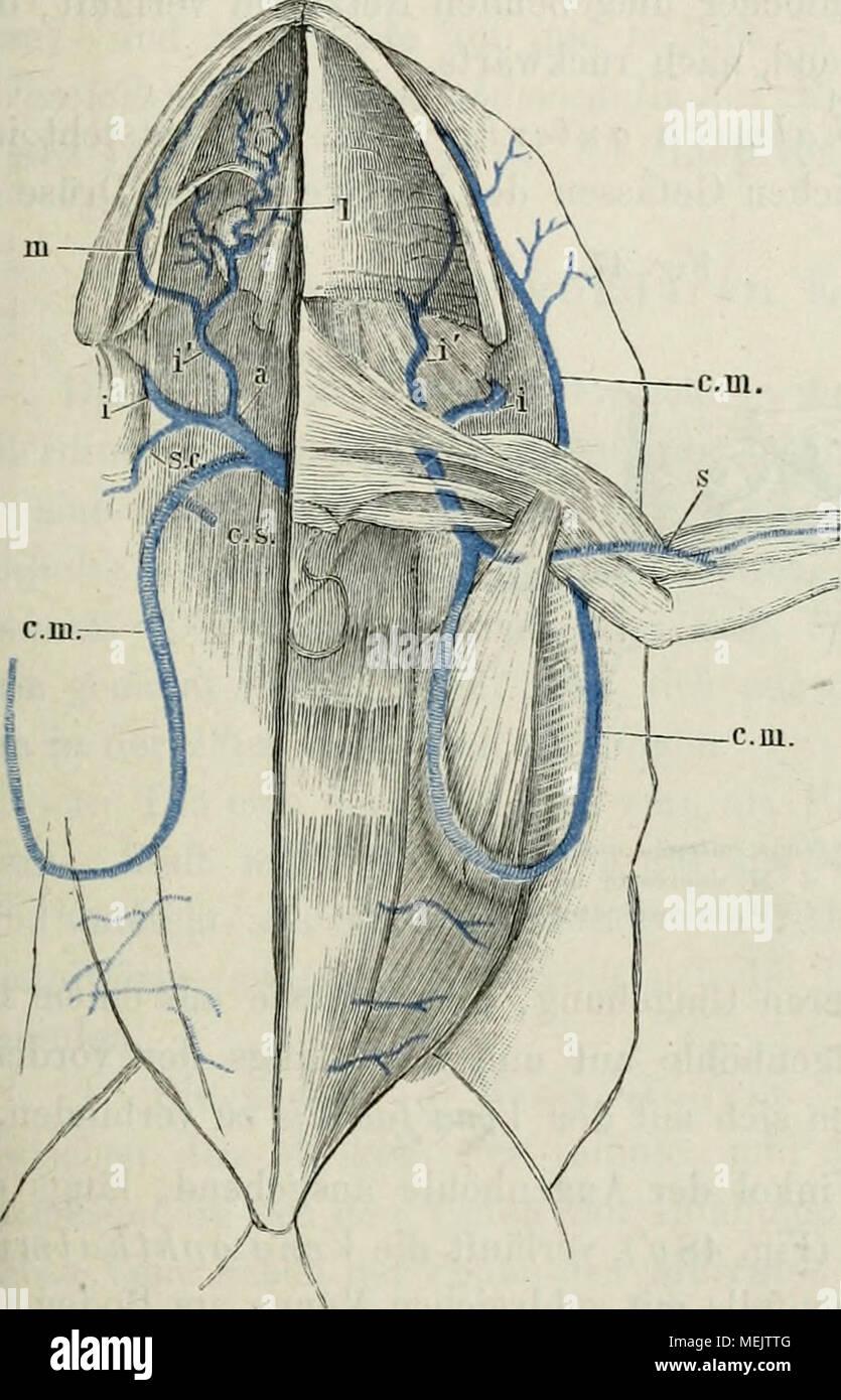 Erfreut Wesentliches Der Anatomie Und Physiologie Scanlon Bilder ...