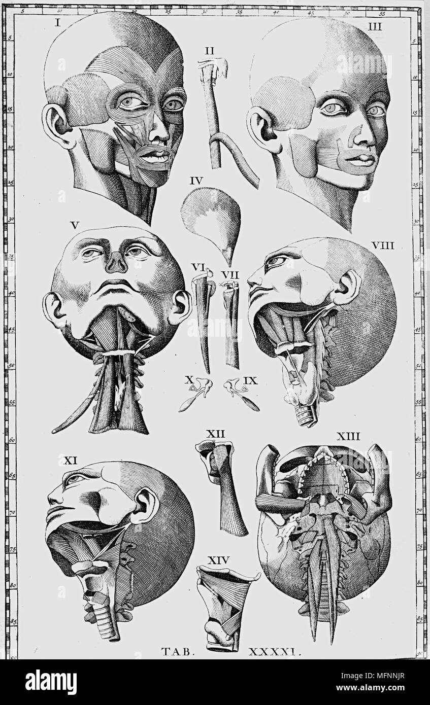 Lujoso Anatomía Cabeza Ct Composición - Anatomía de Las Imágenesdel ...