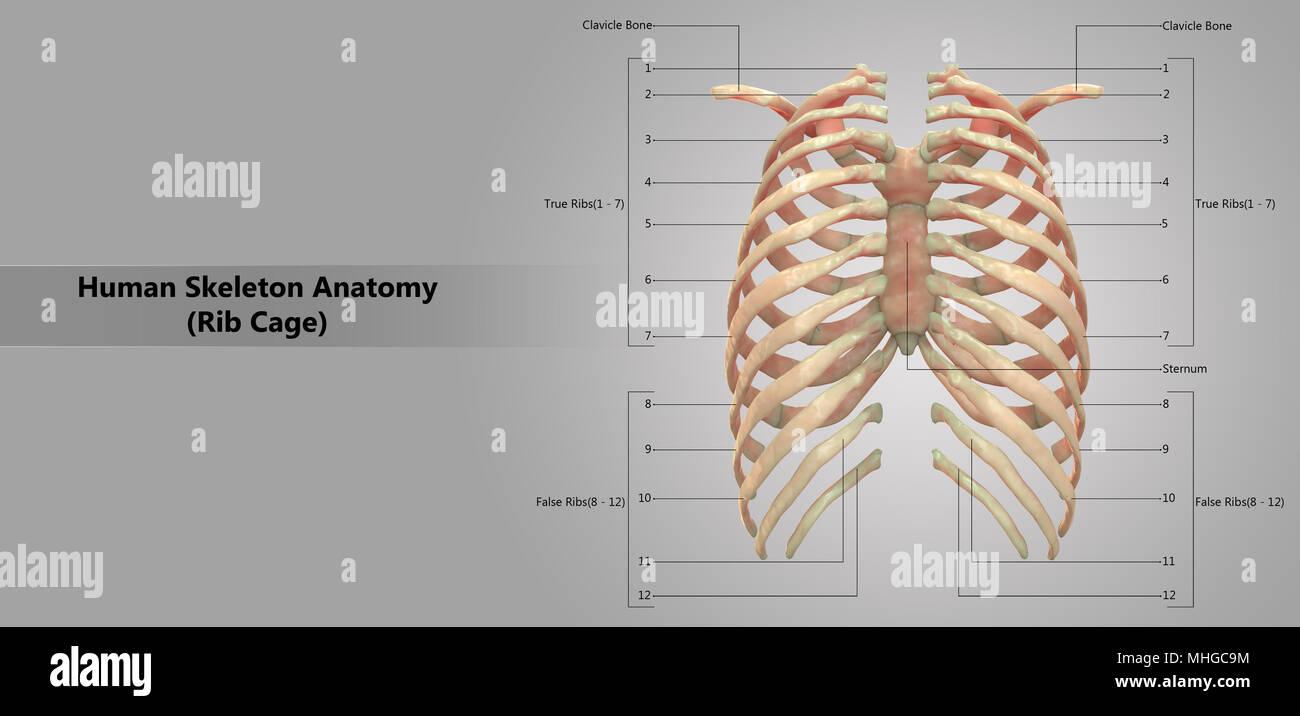 Fantástico Anatomía Y Fisiología Octava Edición Seeley Stephens Tate ...