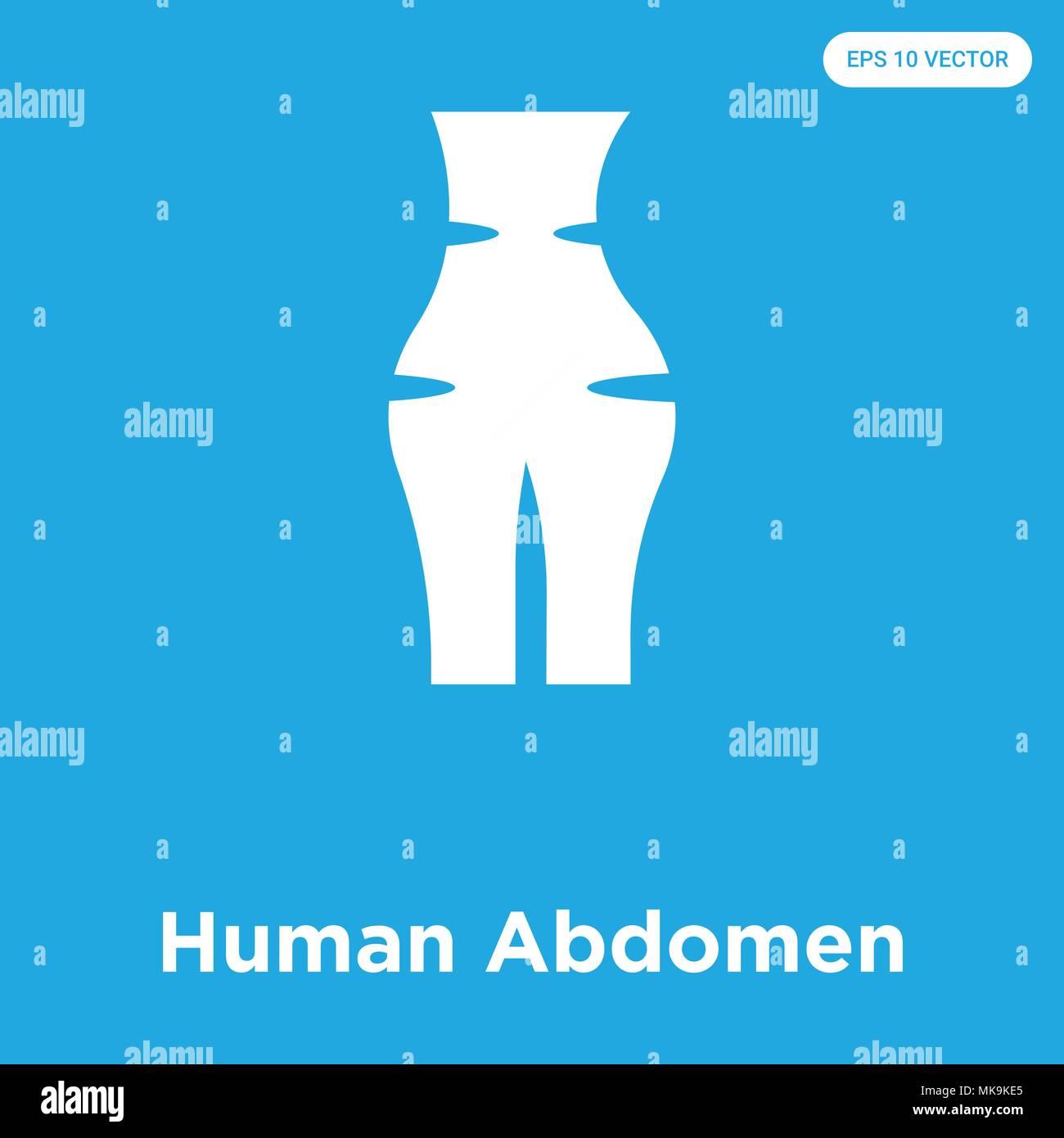 Encantador Foto De Abdomen Humano Imágenes - Anatomía de Las ...