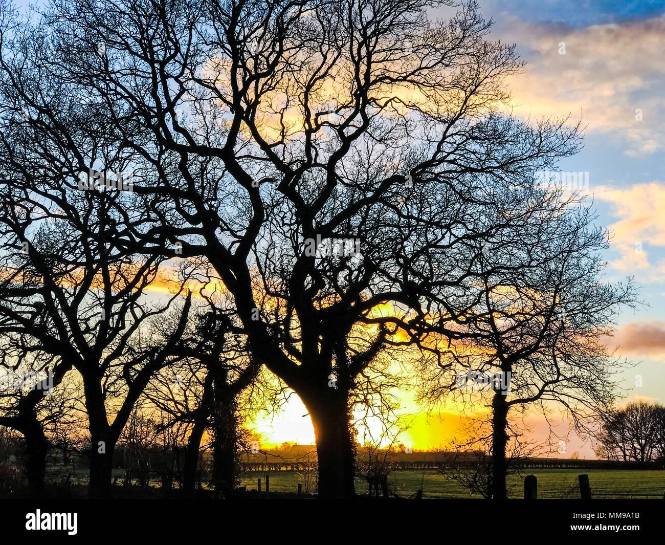 GoTonysmith,@HotpixUK,dramatic,behind,trees