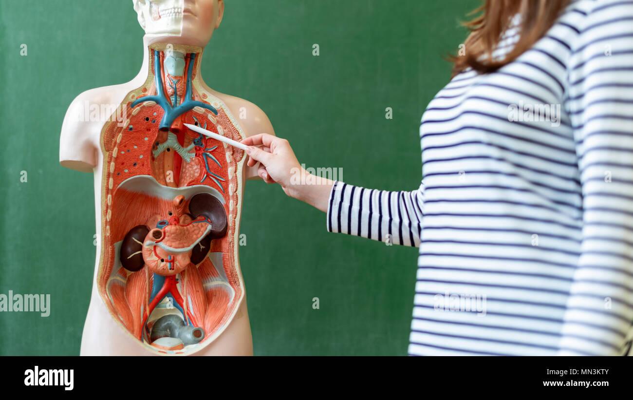 Increíble Hembra Anatomía Cuerpo Humano Ilustración - Anatomía de ...