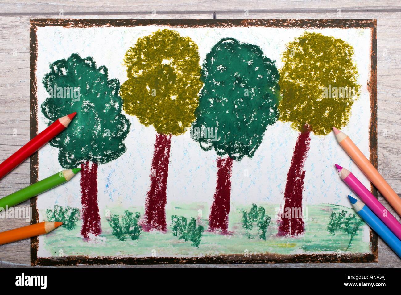 Coloridos Dibujos A Mano Y Lápices De Colores Los árboles De Hoja