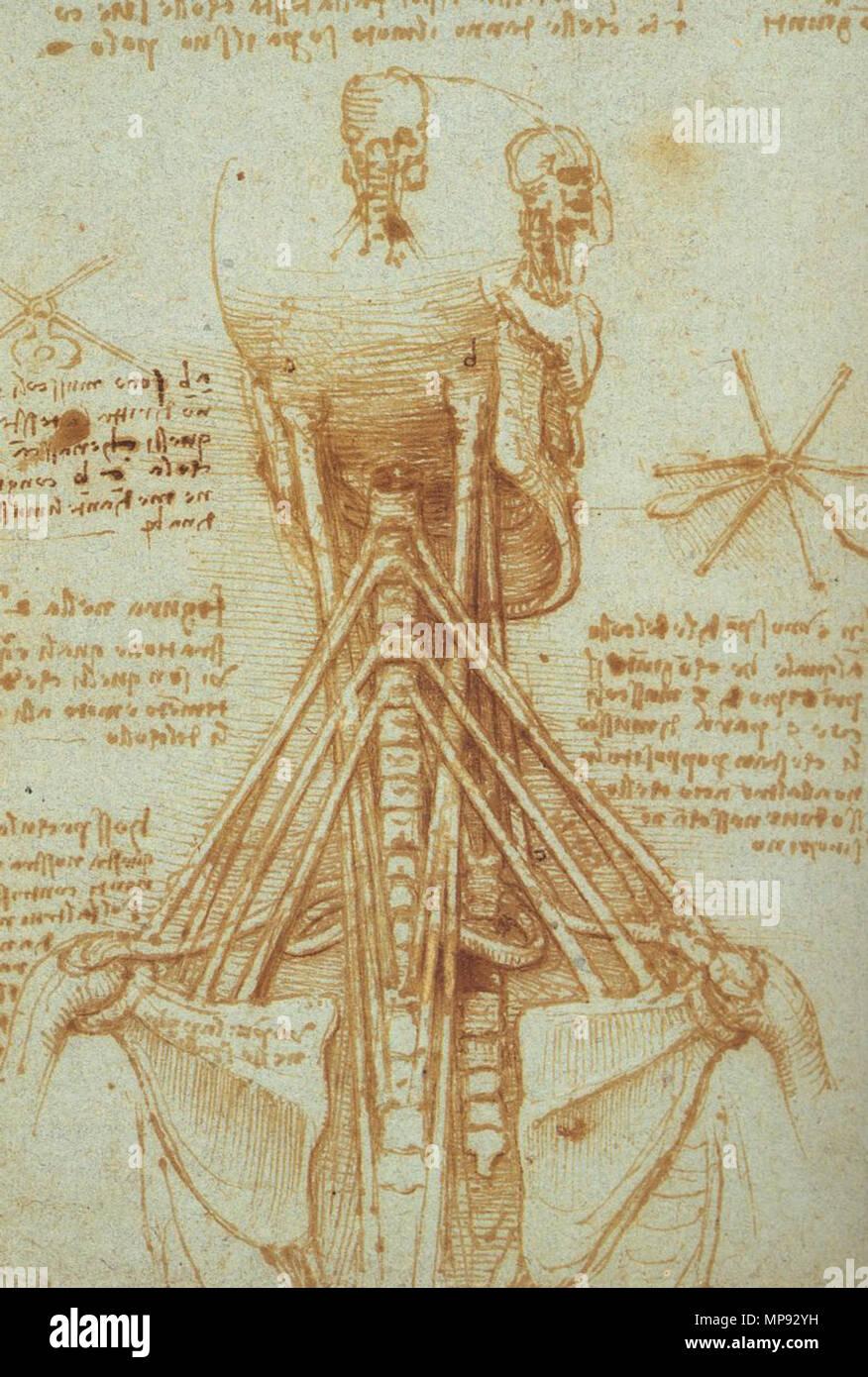 Anatomía de la garganta . circa 1515. Leonardo da Vinci (1452-1519 ...