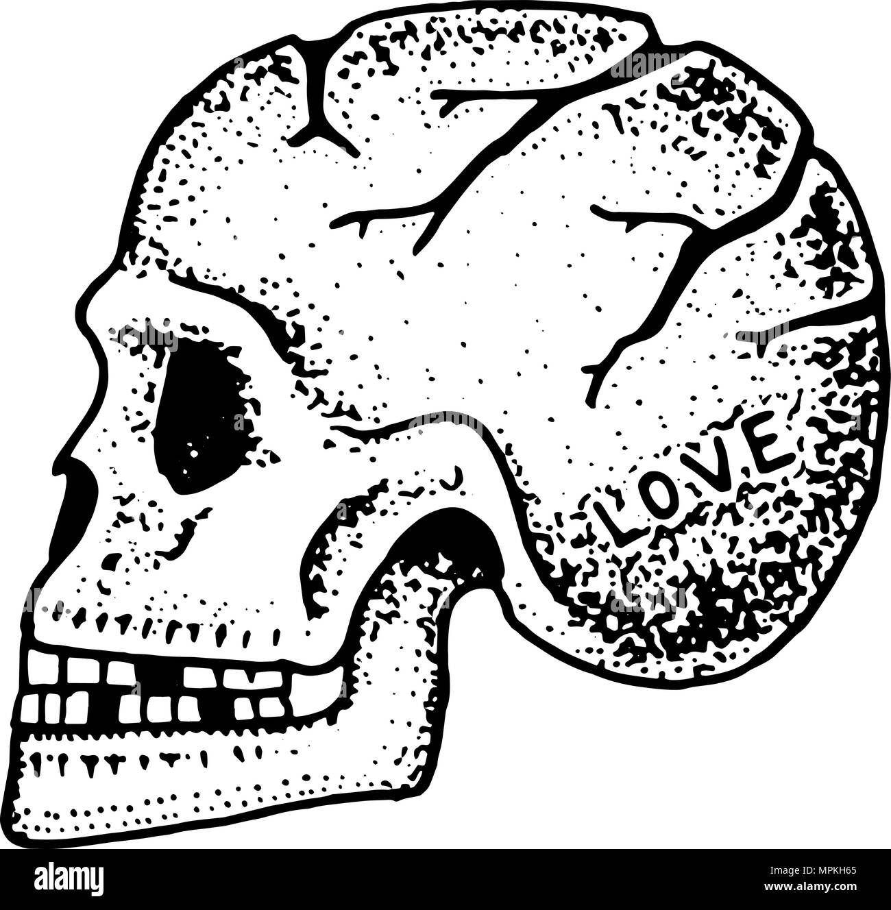 Cráneo humano anatómica. El esqueleto de la cabeza. La moda tatuaje ...