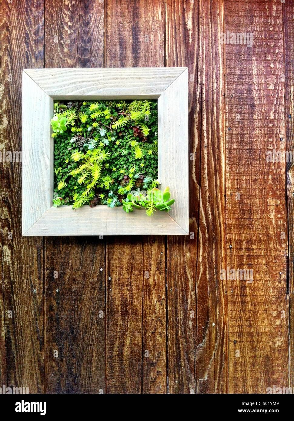 Plantas de jard n montado en pared de madera cuadrada foto for Paredes de madera para jardin