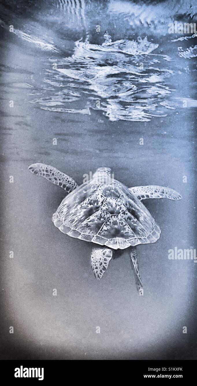 Increíble Dibujo De Tortuga Marina Nemo Para Colorear Regalo ...