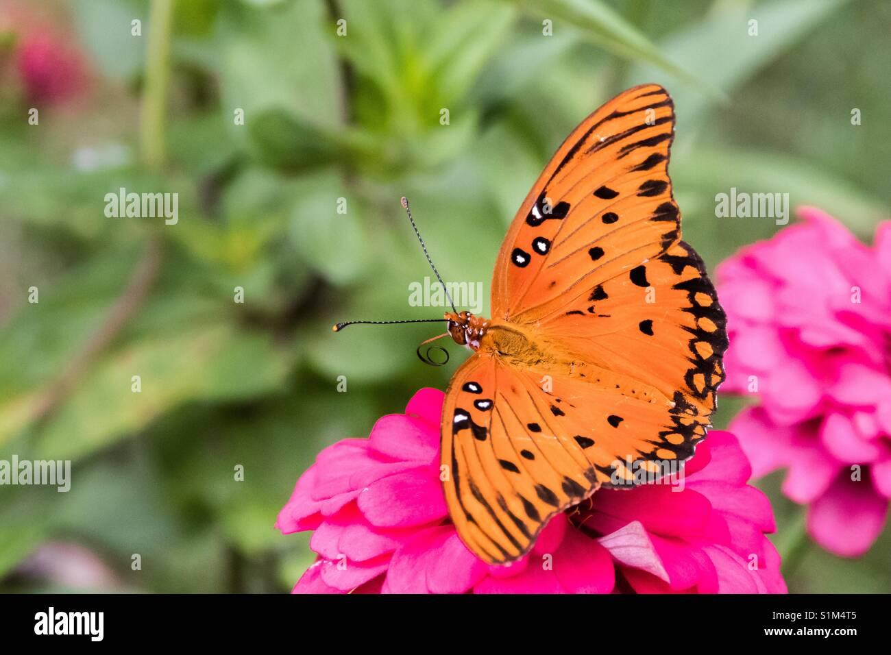 Foto en primer plano horizontal de una mariposa de color naranja ...