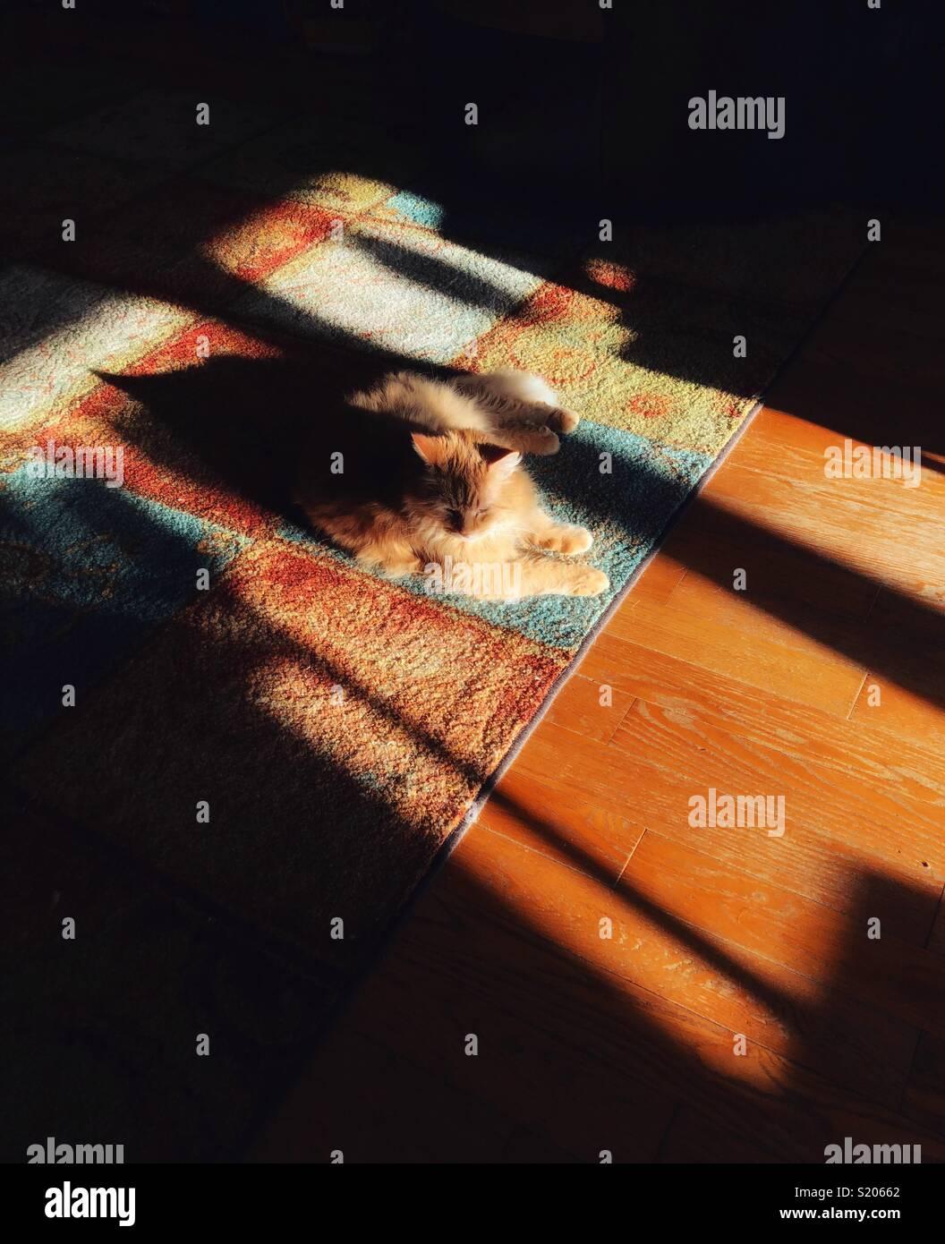 Orange cat sentando en el sol de la mañana sobre una alfombra con dramáticas sombras Imagen De Stock
